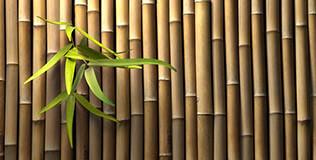 Brise-vue Bambou